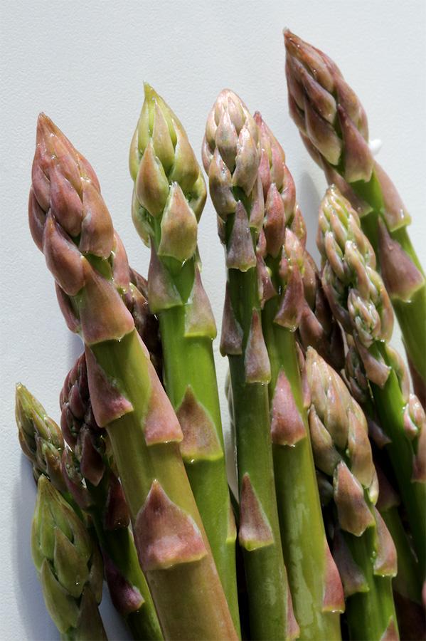 asperges-agriculture-bio